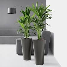 Self Watering Indoor Planters   lechuza delta self watering indoor planter walmart com