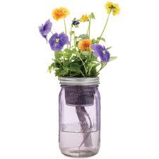 garden jar pansy u2013 modernsprout