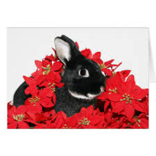black rabbit greeting cards zazzle