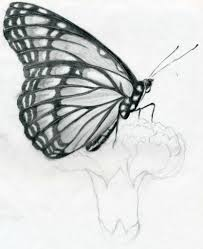 easy pencil drawing butterfly pencil drawings drawing art gallery