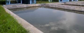 tilapia fish farming information guide asiafarming com