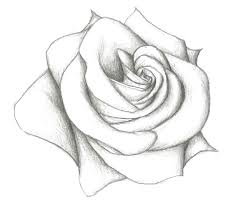 drawings of roses and vines your meme source