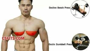 decline bench press muscles dumbbell fly exercise تدريب pinterest exercises workout and gym