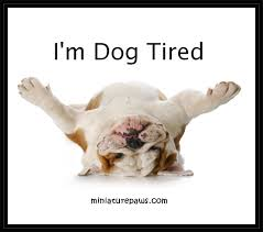 Tired Dog Meme - dog meme dog tired for the love of animals pinterest meme