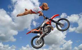 Motocross Meme - super dog photoshopbattles