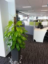 office plant office plants rental chye heng orchid garden pte ltd plants