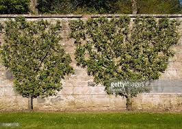 fruit tree stock photos and pictures getty images