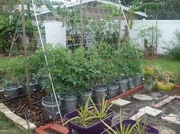 Urban Herb Garden Ideas - 107 best urban gardening ideas images on pinterest gardening