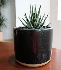 13 succulents that are native haworthia succulent u2013 welltended
