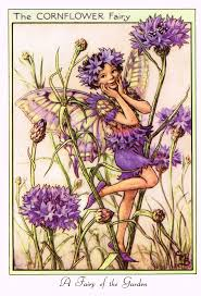 birthstones fairies the lavender fairy by cicely mary barker lavender fairy and sons