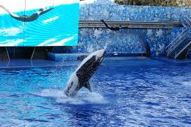 Sea World Orlando Map by File Seaworld Orlando Shamu 1550 Jpg Wikimedia Commons