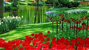 free download stock photo of flowers garden pexels garden trends