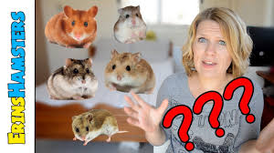 what hamster species is it youtube