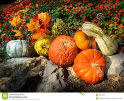 pumpkins gourds autumn leaves and late blooming flowers say