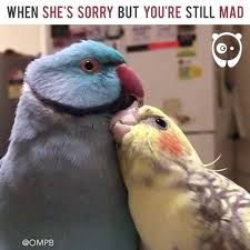 You Still Mad Meme - bored panda when she s sorry but you re still mad by