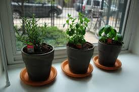 small spaces windowsill herb garden u2013 the artful attempt