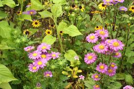 native plant finder plant finder george washington u0027s mount vernon