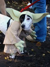 pet parade 50 ridiculously adorable animals in costume pet