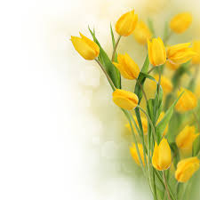 yellow flowers yellow flowers images bdfjade