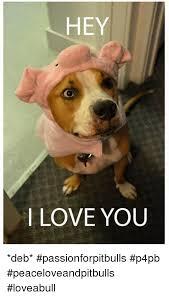 Hey I Love You Meme - hey i love you deb passionforpitbulls p4pb peaceloveandpitbulls