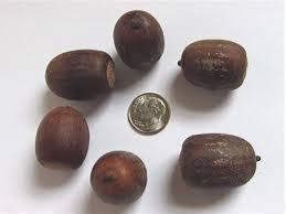 sheffield u0027s seed company seeds for sale tree seeds shrub seeds