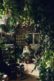 Cascading Indoor Plants by 9 Best Images About Garden On Pinterest Gardens Home And Minis