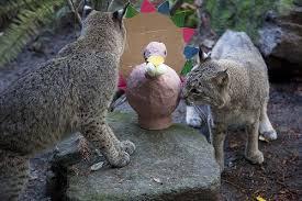 thanksgiving weekend oregon zoo beast feast turkey trot