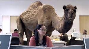 Wednesday Hump Day Meme - hump day camel commercial happier than a camel on wednesday