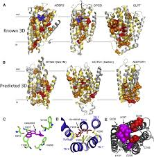 three dimensional structures of membrane proteins from genomic