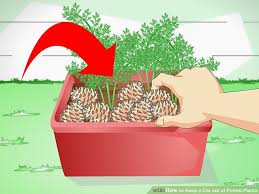 3 ways to keep a cat out of potted plants wikihow