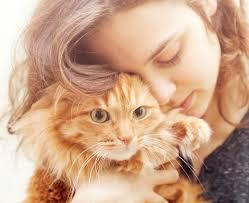 top ten emergencies in cats edmond east animal hospitaledmond