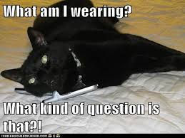 Sexy Sex Memes - lolcats phone sex lol at funny cat memes funny cat pictures