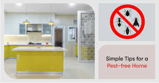 how to clean cupboards after pest 5 easy ways to get rid of pesky kitchen insects
