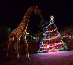 holiday lights safari 2017 november 17 electric safari colorado springs moms blog