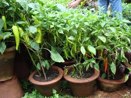 indoor kitchen garden india home outdoor decoration