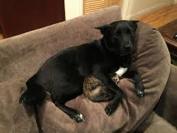Dog Cat Meme - a dog protected a kitten during a lightning storm and here s how