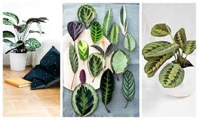 Indore Plants Helpmegrow 10 Low Light Loving Plants For Your Home