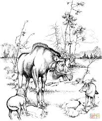 moose and wolves in isle royale national park coloring page free