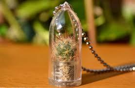 baby cactus plants amenagement lego com
