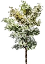 watercolor trees google search arte pinterest watercolor