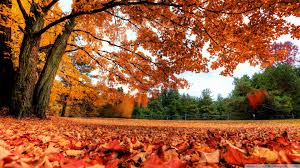 1920x1080 fall wallpaper autumn country hd desktop wallpaper widescreen high definition