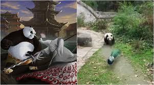 kung fu panda photos latest headlines kung fu
