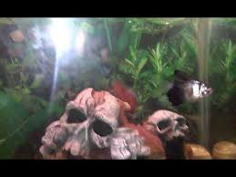 Aquarium Decor Ideas My 20 Gallon Fish Tank Decoration Ideas For Your Aquarium Youtube