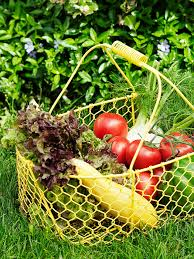 how to plant a vegetable garden herb gardening