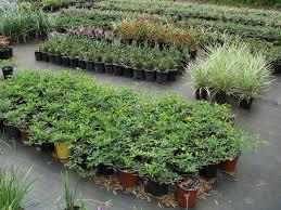just plants plantant