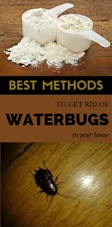 How To Get Rid Of Cockroaches In Kitchen Cabinets by Best Methods To Get Rid Of Waterbugs In Your House Cleaning