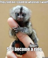 Monkey Meme - meme monkey ring