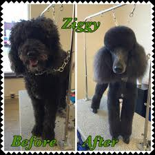 Professional Pet Grooming Services Mankato Mn Calling All Paws