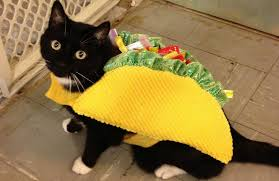 cute halloween cat 10 halloween cats that will make you smile