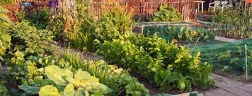 grow your own greenspace landscapes